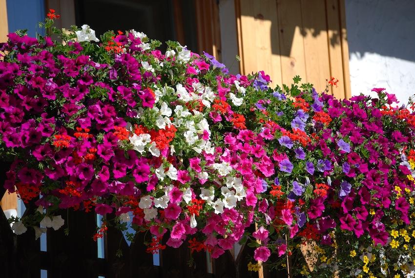 la primavera idee giardino fresco : la Pro Loco di Pettinengo, con il patrocinio del Comune, inaugura la ...