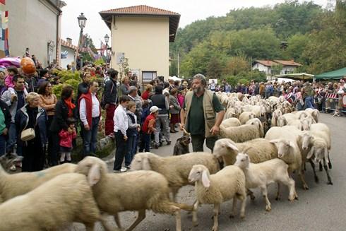 Festa della lana a ternengo - La pagina della colorazione delle pecore smarrite ...