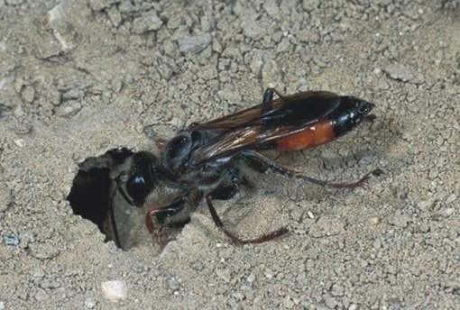 Muore per la puntura di due vespe