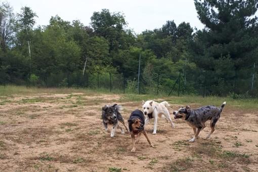 Casapinta: I cani felici sgambettano a Cucciapinta FOTO e VIDEO