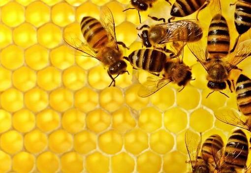 """Giornata mondiale dell'ape, Uncem: """"Proteggere specie e apicoltori"""""""