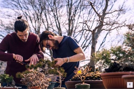 bonsai città studi
