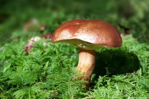 Week end all'insegna dei funghi al Giardino Botanico di Oropa - Foto di repertorio