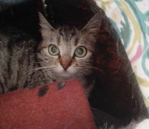 Dolce gattina di sei mesi viveva nel degrado. Salvata, ora cerca casa