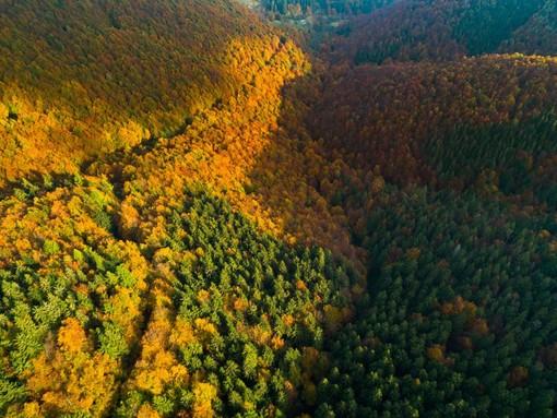 Oasi Zegna, conto alla rovescia per il foliage d'autunno