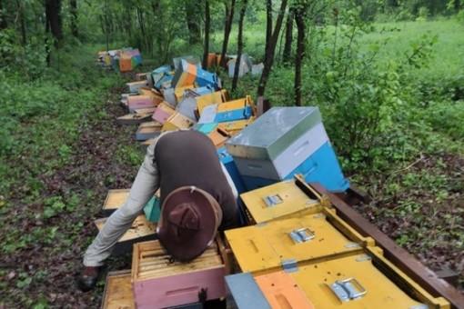 """Milioni di api morte e tutte le casette distrutte: """"Ho male al cuore"""". Una raccolta fondi per aiutare l'apicoltore Mattia VIDEO"""