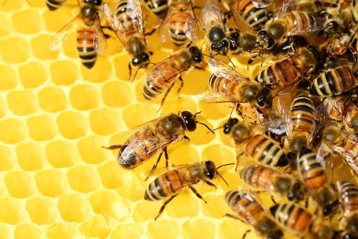 api coldiretti