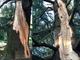 Oggi la Festa dell'Albero: piccoli gesti concreti in difesa dei nostri alberi