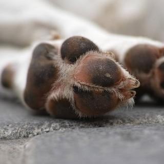 cane perde vita