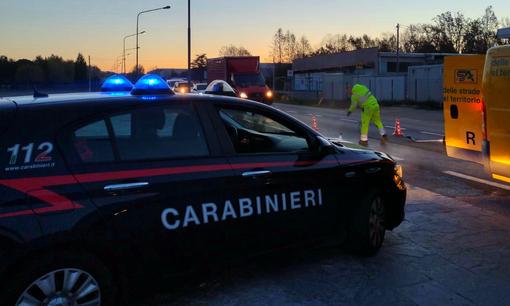 cinghiale carabinieri