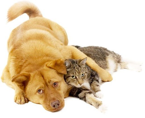 Cosa fare se muore il proprio animale domestico