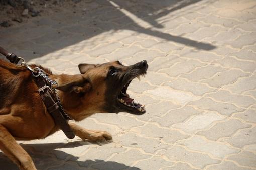 Mongrando, cani di grossa taglia scappano nella notte e attaccano un gregge
