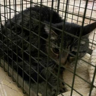 Dal Nord Ovest - Il suo padrone muore e lui rimane solo in casa per un mese: la polizia municipale salva un gattino