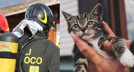 gatto vigili fuoco