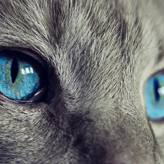 caso covid gatto