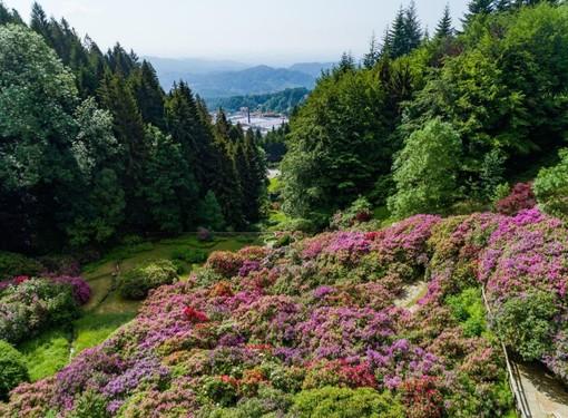 L'Oasi Zegna apre la bella stagione con la fioritura della Conca dei Rododendri