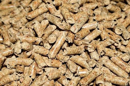 Cosa sono le biomasse e come incidono nella vita di tutti i giorni