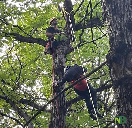 Parapendista incastrato tra gli alberi a Torrazzo, intervento dei Vigili del Fuoco