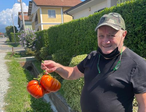 pomodori giganti mongrando