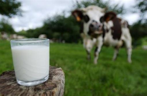 Dalla carne al latte allevatori sotto pressione