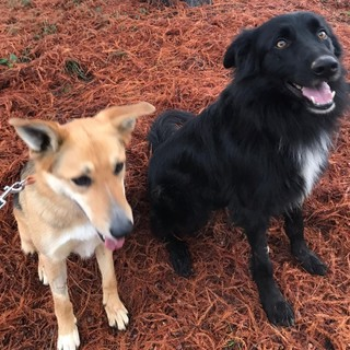 """Due cani avvelenati a Occhieppo Inferiore, la padrona: """"Un gesto ingiustificabile"""""""