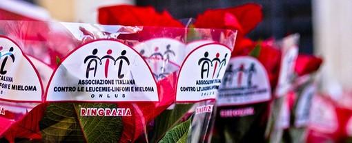 Le Stelle di Natale contro la leucemia, anche a Biella si rinnova il tradizionale appuntamento