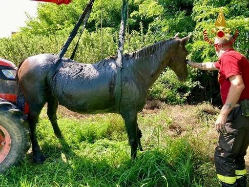 cavallo fango