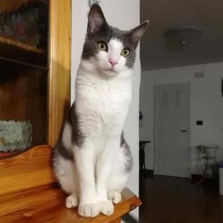 Rinvenuto senza vita dopo 10 giorni di ricerche, il gattino Spritz investito in superstrada