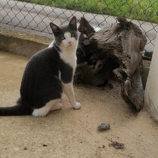Gattino scomparso da 10 giorni, chi ha visto Spritz?