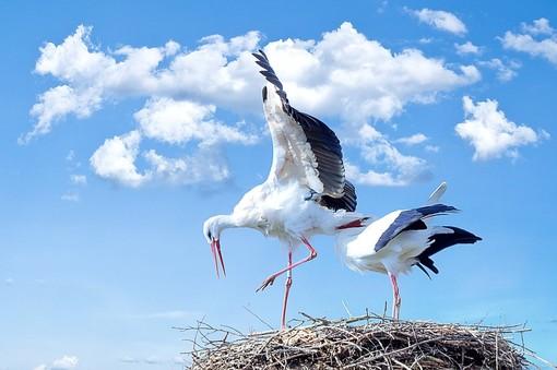 corso birdwatching