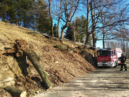 Piante abbattute su cavi Enel: i Vigili del Fuoco di Cossato a Netro e Graglia
