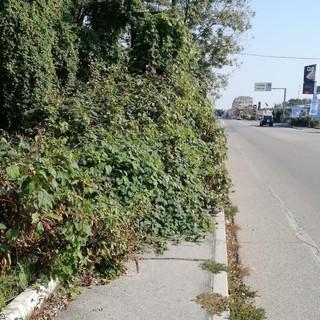 """""""A Biella i marciapiedi sono invasi dalle piante"""", un lettore scrive"""